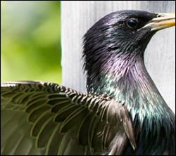 bird removal Burleson