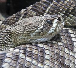 snake removal Burleson